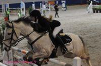 Photo poney : 1145336, r�f�rence : Poney_197116.JPG