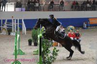 Photo poney : 1145548, r�f�rence : Poney_197736.JPG