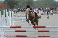 Photo poney : 1039809, r�f�rence : Poney_A054571.JPG