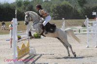 Photo poney : 1042458, r�f�rence : Poney_A055982.JPG