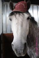 Photo poney : 1038395, r�f�rence : Poney_A056730.JPG