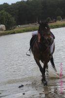 Photo poney : 1041916, r�f�rence : Poney_A057285.JPG