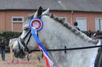 Photo poney : 1123517, r�f�rence : Poney_A181487.JPG