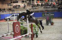 Photo poney : 1144923, r�f�rence : Poney_A196883.JPG