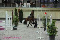 Photo poney : 1146638, r�f�rence : Poney_A198010.JPG