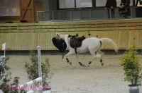 Photo poney : 1146509, r�f�rence : Poney_A198168.JPG