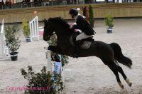 Photo poney : 1146260, r�f�rence : Poney_A198501.JPG