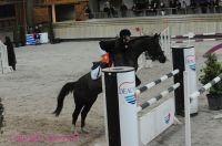 Photo poney : 1146101, r�f�rence : Poney_A199337.JPG