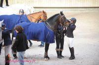 Photo poney : 1147076, r�f�rence : Poney_A200263.JPG