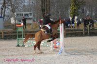 Photo poney : 1162774, r�f�rence : Poney_A213708.JPG