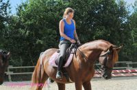 Photo poney : 1172202, r�f�rence : Poney_A222536.JPG