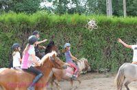 Photo poney : 1172732, r�f�rence : Poney_A224276.JPG