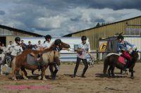 Photo poney : 1172569, r�f�rence : Poney_A224839.JPG