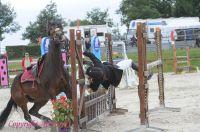 Photo poney : 1173836, r�f�rence : Poney_A226347.JPG