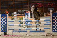Photo poney : 1162615, r�f�rence : Poney_Di_D001351.JPG