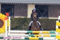 Photo poney : 1167940, r�f�rence : Poney_Di_D004550.jpg