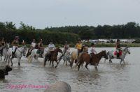 Photo poney : 53290, r�f�rence : poney_BSC_157592.JPG