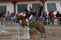 Photo poney : 53879, r�f�rence : poney_BSC_158670.JPG
