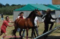 Photo poney : 53966, r�f�rence : poney_BSC_159728.JPG