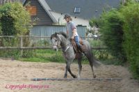 Photo poney : 55744, r�f�rence : poney_BSC_161143.JPG
