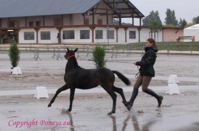 Photo poney : 55898, r�f�rence : poney_BSC_161313.JPG